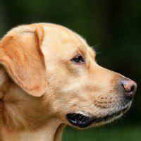 alimentazione cani casalinga alimentazione casalinga con insufficienza renale
