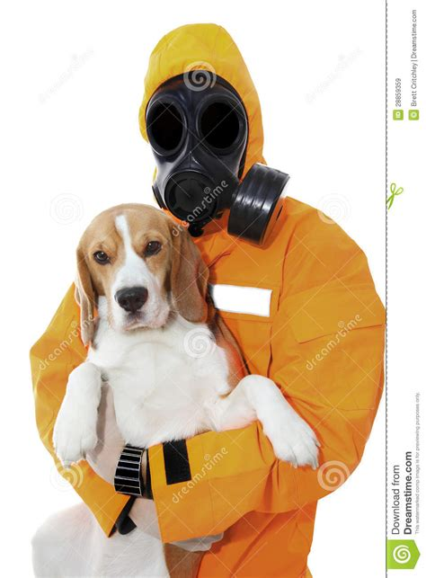 stinky puppy smelly royalty free stock images image 28859359