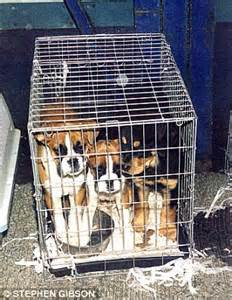 puppy farms the shameful about uk s squalid puppy farms greedy breeders keeping dogs