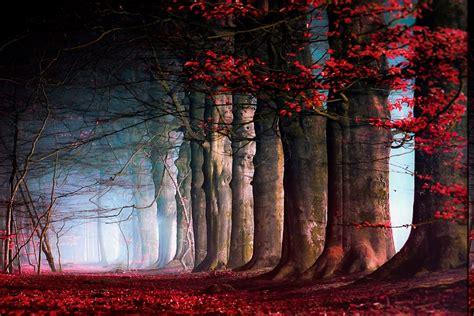 nature landscape fairy tale trees leaves mist path