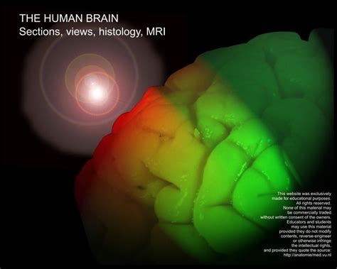 the human brain sections best 25 brain sections ideas on pinterest brain lobes