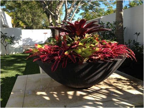 bromeliad bowl large plant pots tropical garden