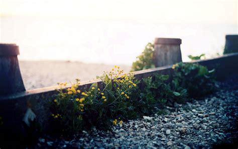 Landscape Photography Depth Of Field Photography Nature Landscape Plants Depth Of