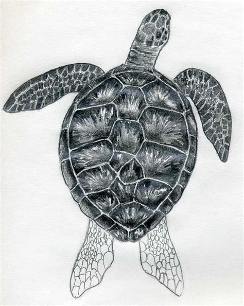 turtle pattern drawing realistic box turtle drawing
