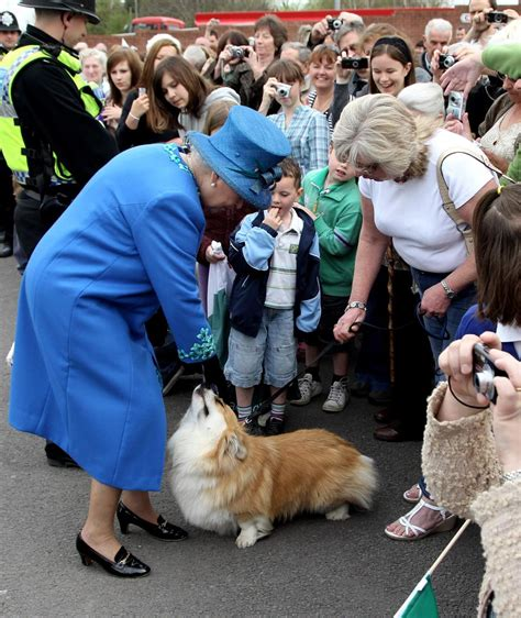 queen elizabeth ii corgis royal family could add two new dogs when meghan markle