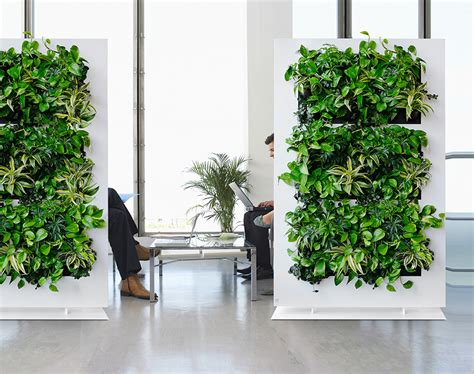 plant partition living green divider installation sarasota ta