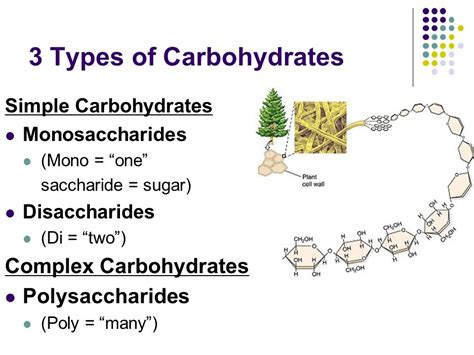 8 types of carbohydrates macromolecules what cells are made of ppt