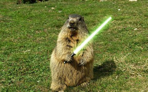 groundhog day jpg marmot with lightsaber walldevil