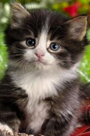 cute cat wallpaper live download cute cat live wallpaper for android by handysoft