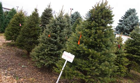 8 places to get a christmas tree in calgary daily hive