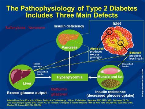Pathophysiology Of Diabetes Type 2 Essay by Windows Azure Web