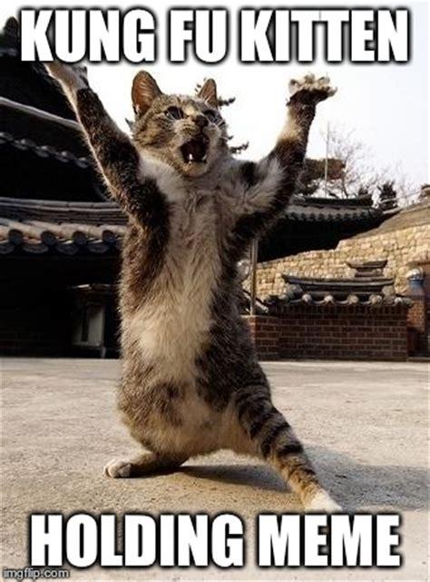 Fu Meme - kung fu kitten imgflip