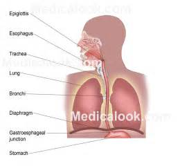 tag anatomy of human lungs ppt archives human anatomy