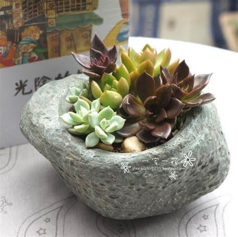 Indoor Succulent Planter by Indoor Succulent Plants Www Pixshark Images