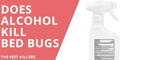 alcohol for bed bugs does alcohol kill bed bugs fact or myth thepestkillers
