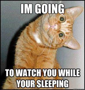 Cat Memes 2018 - funny cat memes creepy cat meme quickmeme cats pinterest creepy cat funny cat memes
