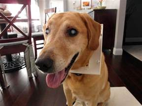 How To Tell If Dog Is Blind Blindness In Dogs Causes And Symptoms