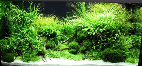 Aquascape Plants by Marcel Dykierek And Aquascaping Aqua Rebell