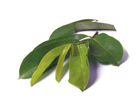 Sakit Pinggang Sudah 1 Minggu Easyfit Health Waist Belt 10 manfaat sirsak untuk menyembuhkan penyakit sehat dengan herbal