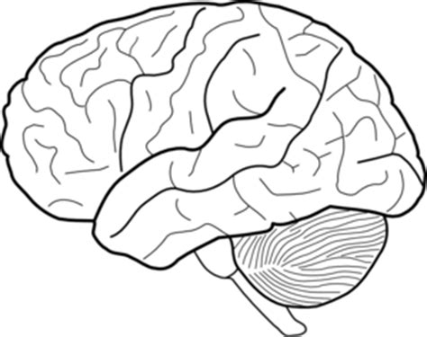 Brain Outline Lobes by Brain Lobes Coloring Page Www Pixshark Images Galleries With A Bite