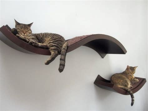 the 25 best ideas about cat wall shelves on