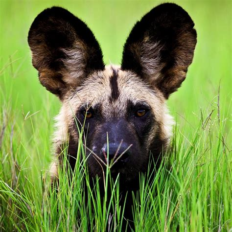 animal facts encyclopedia