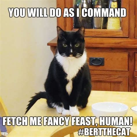 Fancy Feast Meme - you will do as i command imgflip
