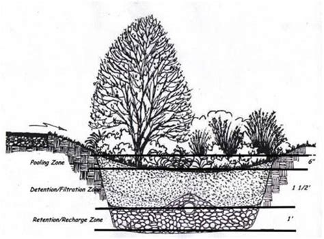 rain garden cross section rain gardens