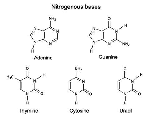 acid diagram building blocks of study guide alyvea