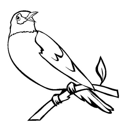coloring page of a robin bird robin bird coloring page birds eat worm grig3 org