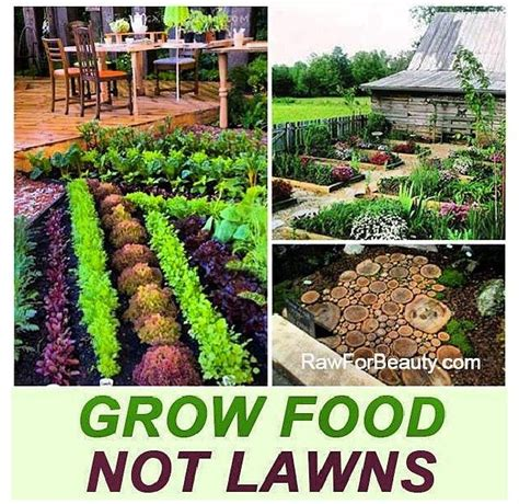 how much sun does a vegetable garden need 22 best grow food not lawns images on florida