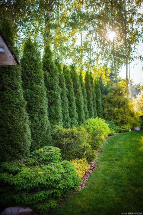 amazing evergreen landscape ideas  front yard