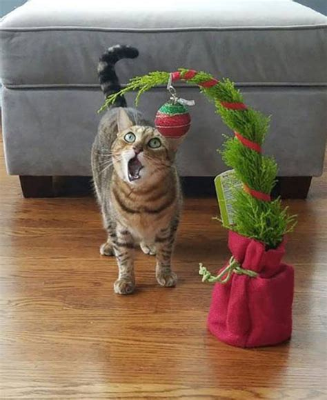 funny cats in christmas trees 41 photos for ho ho laughs team jimmy joe
