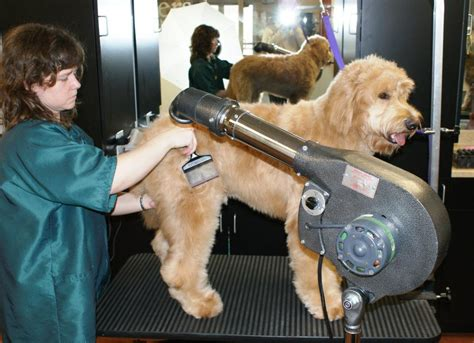 dryer for dogs july 2013 be a better groomer