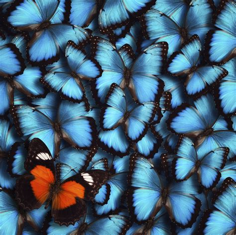 x snapshot of butterfly wings reveals underlying physics of color