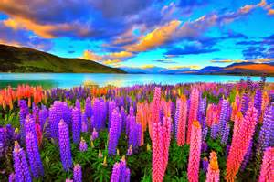 most beautiful colors the natural colorful image the world s most beautiful