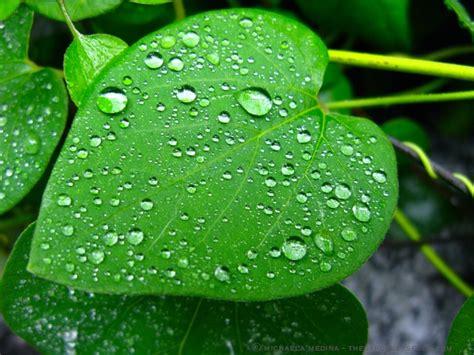 How To Spell Chandelier 187 Raindrops The Gardener S Eden