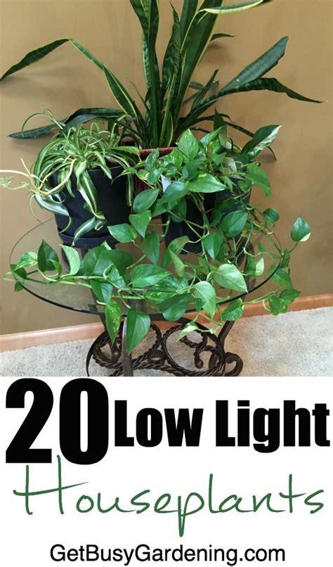 best indoor plants little light best 25 small indoor plants ideas on pinterest