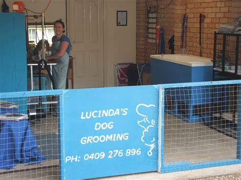 in house dog grooming house grooming 28 images best 25 boarding kennels ideas on animal house rescue