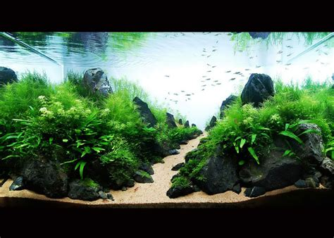freshwater aquarium aquascape design ideas modern aquarium design with aquascape style for new