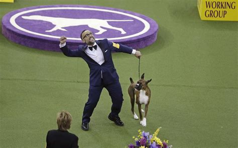 when is the westminster show 2017 apphoto dog show