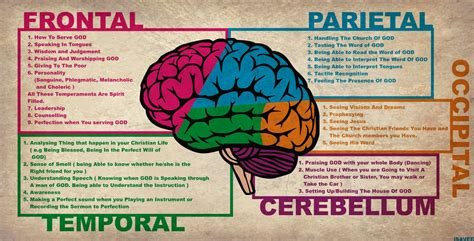 brain functions diagram human anatomy diagram praising human brain anatomy god