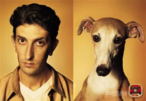 do dogs their owners do dogs resemble their owners neatorama