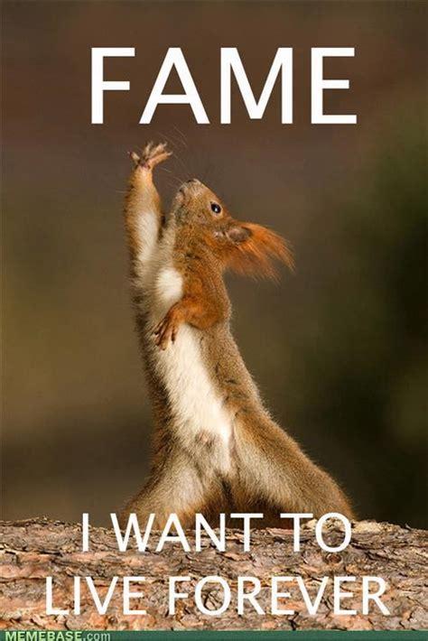 Squirrel Meme - monday memes squirrels nepa blogcon