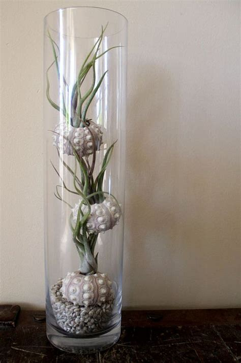 coolest ways  display air plants shelterness