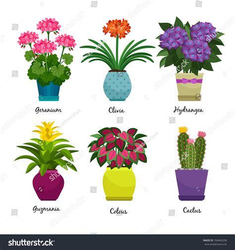 indoor garden songs indoor garden plants fresh flowers isolated stock vector 704462038