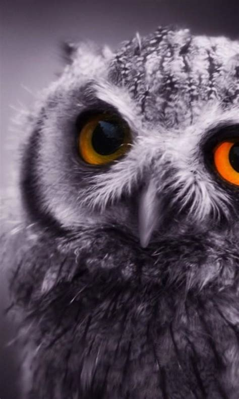 wallpaper android owl owl wallpapers android apps on google play