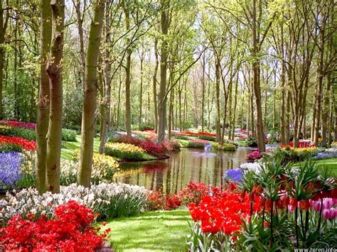 Naturals Colorful Flower Land Colorful Flower Garden