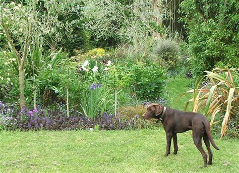 Garden Dogs Going To The Dogs