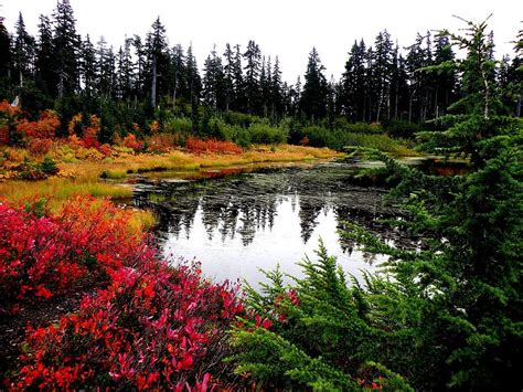 washington state colors fall colors in washington state photograph by higgins